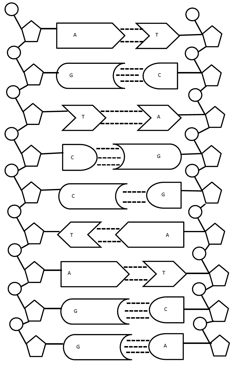 Dna Structure Worksheet Free Worksheets Library – Dna Model Worksheet